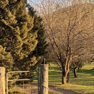 Top 5 faves in Mudgee.